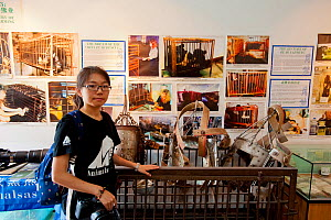 Animals Asia volunteer standing in front of a display about bear bile farming and a disused, rusty cage full of illegal metal jackets used to hold a catheter in place so that bile can constantly leak...  -  Inaki  Relanzon