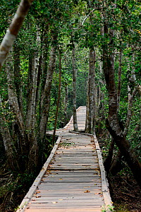 Wooden walkway through the forest, Tanjung Puting National Park, Kalimantan, Borneo. Indonesia, October 2015. - Enrique Lopez-Tapia