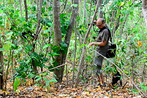 Tourist watching a Black crested macaque (Macaca nigra) walking away after it jumped on him, Tangkoko National Park, Sulawesi, Indonesia, October. Sequence 3 of 4. - Enrique Lopez-Tapia