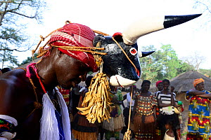 Man dancing with mask of bull on head, Formosa Island, Bijagos UNESCO Biosphere Reserve, Guinea Bissau, February 2015. - Enrique Lopez-Tapia