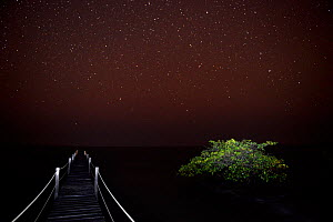 Starry night over Atlantic Ocean, from a wooden pier with Mangrove tree beside it, Orango Island, Bijagos UNESCO Biosphere Reserve, Guinea Bissau, February 2015. - Enrique Lopez-Tapia