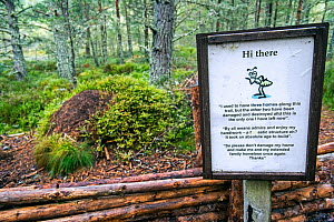 Information / conservation sign about Red wood ants / Horse ant  (Formica rufa) nests made of conifer needles,  Abernethy Forest, Scotland, September  -  Philippe Clement