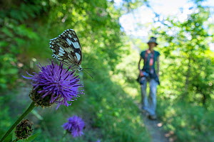 Marbled white butterfly (Melanargia galathea) with woman walking in the background. Aosta Valley, Gran Paradiso National Park, Italy. - Edwin Giesbers