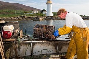 Fisherman removing the catch from a lobster pot, Lamlash Bay, Isle of Arran, South Arran Marine Protected Area, Scotland, UK, August.  -  SCOTLAND: The Big Picture