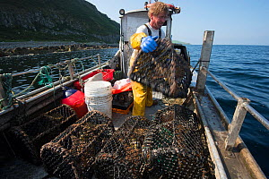Fisherman stacking lobster pots aboard fishing boat, Lamlash Bay, South Arran Marine Protected Area, Isle of Arran, Scotland, UK, August 2016.  -  SCOTLAND: The Big Picture