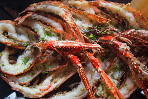 Meal of langoustine / Norway lobster (Nephrops norvegicus) in a restaurant on Island of Arran, caught in Lamlash Bay, South Arran Marine Protected Area, Scotland, UK, August 2016.  -  SCOTLAND: The Big Picture