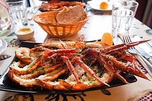 Meal of langoustine / Norway lobster (Nephrops norvegicus) in a restaurant on Isle of Arran, caught in Lamlash Bay, South Arran Marine Protected Area, Scotland, UK, August 2016.  -  SCOTLAND: The Big Picture