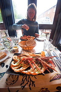 Woman eating langoustine / Norway lobster (Nephrops norvegicus) in a restaurant on Isle of Arran, caught in Lamlash Bay, South Arran Marine Protected Area, Scotland, UK, August 2016.  -  SCOTLAND: The Big Picture