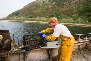 Bringing a lobster pot on board, Lamlash Bay, South Arran Marine Protected Area, Isle of Arran, Scotland, UK, August.  -  SCOTLAND: The Big Picture