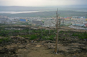 Polluted land with dead trees near Norilsk, a large industrial town above the Arctic Circle which produces Nickle, Palladium, Copper, Cobalt etc. and is the largest stationary source of air pollution...  -  Willem  Kolvoort