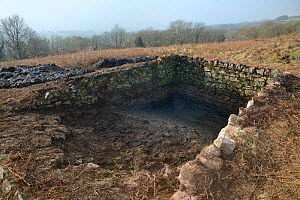 Derelict dewpond cleared of weeds, mud and rocks by volunteers from the Reptile and Amphibian Group for Somerset and Somerset Wildlife Trust during renovation work to encourage use by Great crested ne... - Nick Upton