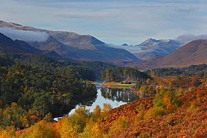 Glen Affric in autumn, Highlands, Scotland, UK, October 2012. - SCOTLAND: The Big Picture