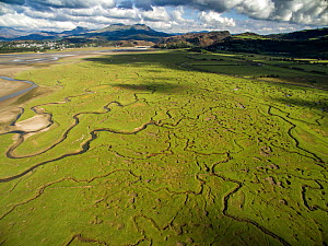 Aerial view of saltmarsh with small meandering drainage tributaries. River Dwyryd estuary, village of Portmeirion and Snowdonia in background, Glastraeth, Talsarnau, Gwynedd, Wales, UK, October 2016.  -  Graham Eaton