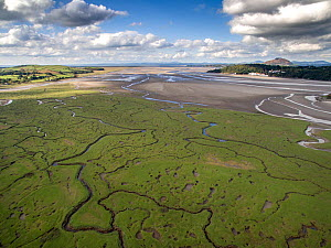 Aerial view of saltmarsh with small meandering drainage tributaries. River Dwyryd estuary and village of Portmeirion in background, Glastraeth, Talsarnau, Gwynedd, Wales, UK, October 2016.  -  Graham Eaton