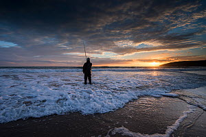 Angler fishing at dusk in sea surf. Bass (Dicentrarchus labrax) are often caught as they hunt for food churned up by waves, Porth Ceiriad, Pwllheli, Gwynedd, Wales, UK, December 2016.  -  Graham Eaton