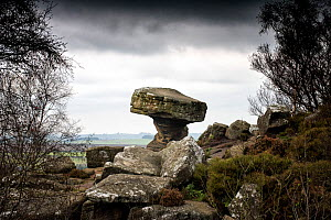 Druids Writing Desk, rock pedestal created by variable erosion of soft and hard layers of carboniferous age millstone grit, Brimham Rocks, Harrogate, Yorkshire, England, UK, October 2016. - Graham Eaton