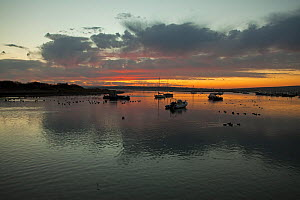Dawn over Keyhaven Harbour Hampshire and Isle of Wight Wildlife Trust Reserve, Keyhaven, Hampshire, England, UK, December. - Mike Read