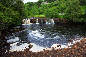 Wainwath Falls River Swale, Swaledale, Yorkshire Dales National Park, Yorkshire, England, UK, July. - Mike Read
