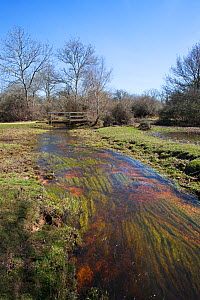 Restored course of Fletcher's Water Stream with Fletcher's Thorns beyond, New Forest National Park, Hampshire, England, UK, April. - Mike Read