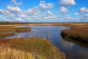 Farlington Marshes Hampshire and Isle of Wight Wildlife Trust Reserve, Hampshire, England, UK, October. - Mike Read