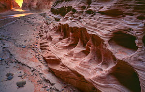 Navajo sandstone canyon walls eroded and sculpted by Paria River floods, Paria Canyon,  Vermilion Cliffs National Monument,  Arizona, USA.  -  Jack Dykinga