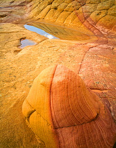 Petrified sand dunes at sunrise with rain-filled 'pot holes' and banded sandstone in foreground. Vermilion Cliffs National Monument,Paria Canyon-Vermilion Cliffs Wilderness, Arizona, USA.  -  Jack Dykinga