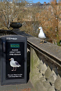 Lesser black-backed gull (Larus fuscus) perched near a gull-proof bin saying 'Please don't feed the gulls' Bath, UK, March. - Nick Upton
