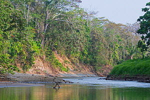 Chucunaque River in the Darien National Park UNESCO World Heritage Site, Panama. - David Tipling