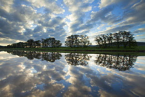 Trees and clouds reflected in River Spey at dawn, Cairngorms National Park, Scotland, UK, June 2013.  -  SCOTLAND: The Big Picture