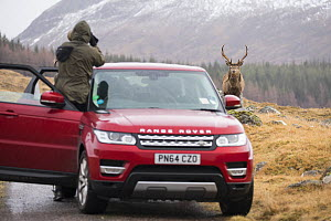 Tourist taking photograph from car of Red deer (Cervus elaphus) stag next to road in Scottish Highlands, Scotland, UK, February 2016. - SCOTLAND: The Big Picture