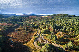 Aerial view of Abernethy Forest with Cairngorm mountain range in background, Cairngorms National Park, Scotland, UK, November 2016. - SCOTLAND: The Big Picture