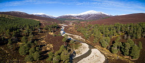 Pine trees alongside Quoich Water with Ear-choire Sneachdach, Coire Gorm and Carn Allt na Beinne in the background. Glen Quoich, Mar Lodge Estate, Deeside, Cairngorms National Park, Scotland, UK, Marc...  -  SCOTLAND: The Big Picture