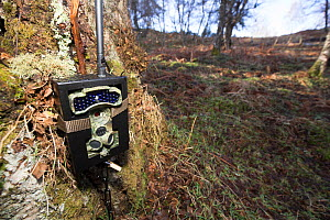 GPRS camera trap at base of tree. Emails surveillance photographs of Wildcat (Felis silvestris grampia) live traps to fieldworkers every four hours, Strathspey, Cairngorms National Park, Scotland, UK,...  -  SCOTLAND: The Big Picture