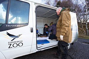 Conservationists and veterinarian from The Royal Zoological Society Scotland / RZSS taking measurements of a Scottish wildcat (Felis silvestris grampia). Inside RZSS mobile vet unit, Strathsprey, Cair... - SCOTLAND: The Big Picture