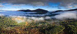 Rothiemurchus Forest in morning mist, Cairngorms National Park, Scotland, UK, October 2016. - SCOTLAND: The Big Picture