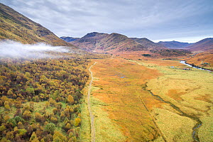 Deer fence showing the effect of grazing animals, with Birch woodland on one side and grass on the other, Glen Affric, Scotland, UK, October 2016. - SCOTLAND: The Big Picture