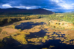 Bogach, a wetland area in the outskirts of Aviemore, Cairngorms National Park, Scotland, UK, October 2016.  -  SCOTLAND: The Big Picture