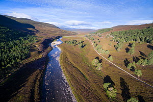 River Dee flowing through moorland with patches of Scots pine (Pinus sylvestris), Deeside, Cairngorms National Park, Scotland, UK, September 2016.  -  SCOTLAND: The Big Picture
