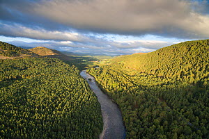 River Dee flowing through Scots pine (Pinus sylvestris) forest in morning light, Deeside, Cairngorms National Park, Scotland, UK, September 2016. - SCOTLAND: The Big Picture