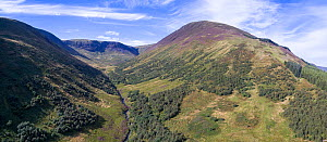 Forest regeneration in Carrifran, a 1600 acre ice carved valley. Part of Carrifran Wildwood, an initiative led by the Borders Forest Trust, Moffat Hills, Scotland, UK, November 2016. - SCOTLAND: The Big Picture