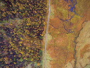 Aerial view of Deer fenced enclosure showing effects of grazing on forest growth, Glen Affric, Scotland, UK, October 2016. - SCOTLAND: The Big Picture