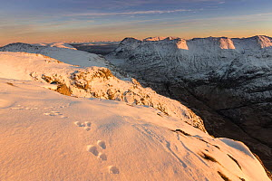 Mountain hare tracks in snow on Am Bodach, looking south east to Stob nan Cabar and Buachaille Etive Beag, Glen Coe, Lochaber, Scotland, UK, November - SCOTLAND: The Big Picture
