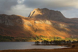 Row of Scots pine (Pinus sylvestris) on banks of Loch Maree with Slioch in background, Benn Eighe National Nature Reserve, Wester Ross, Scotland, October 2016.  -  SCOTLAND: The Big Picture