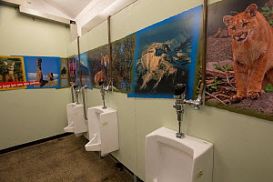 Toilet block with wildlife photographs on walls, Banff National Park, Alberta, Canada, June - SCOTLAND: The Big Picture