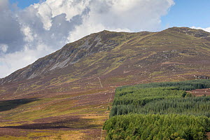Heather moorland scarred with patchwork burning neighboured by non-native tree plantation, Pitlochry, Perthshire, Scotland, UK, March  -  SCOTLAND: The Big Picture