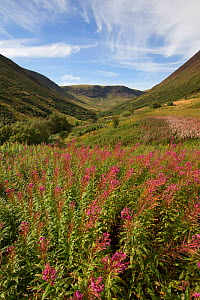 Carrifran Valley, site of major woodland restoration project led by Carrifran Wildwood and Borders Forest Trust, Dumfries and Galloway, Scotland, UK, March  -  SCOTLAND: The Big Picture
