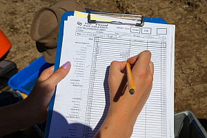 Hands of woman writing on clipboard. Recording fish counts as part of the Eddleston Water Project, where sections of river are being re-naturalised to improve biodiversity and reduce flooding. Peebles... - SCOTLAND: The Big Picture