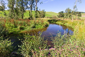 Recently naturalised and re-meandered river channel after decades of straightening. Part of Eddleston Water Project led by Tweed Forum, Peebles, Tweeddale. Scotland, UK, June 2017  -  SCOTLAND: The Big Picture