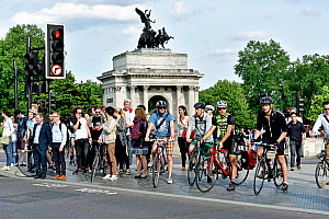 Commuter cyclists and pedestrians waiting to cross road, Hyde Park Corner, Central London, England, Britain, UK, June 2015.  -  Pat  Tuson