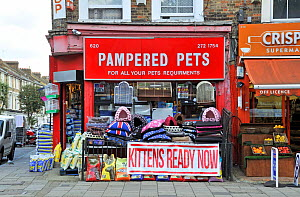 Pampered Pets pet shop, with - Kittens Ready Now - sign, Holloway Road, London Borough of Islington, England, UK, August.  -  Pat  Tuson